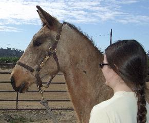 Kate & Don Brego (2008 Lusitano/Dutch Stallion)